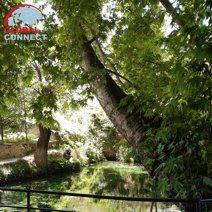 chor_chinor_garden_urgut_1.jpg