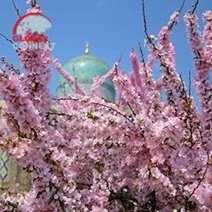 spring_in_uzbekistan.jpg