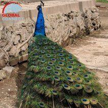 tashkent_zoo.jpg