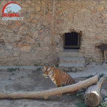 tashkent_zoo_1.jpg